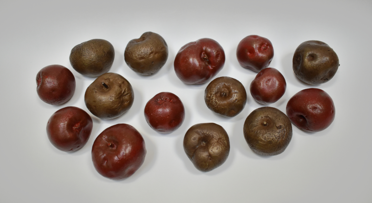 Wild Apples (The Fruit of Labour)